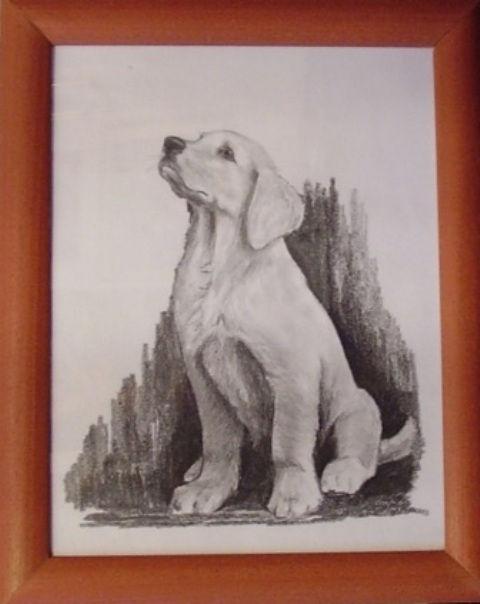 ostatní-kresby-psu (8)