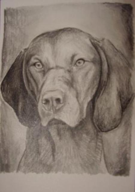 ostatní-kresby-psu (24)