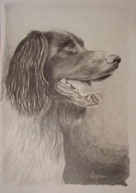 ostatní-kresby-psu (30)