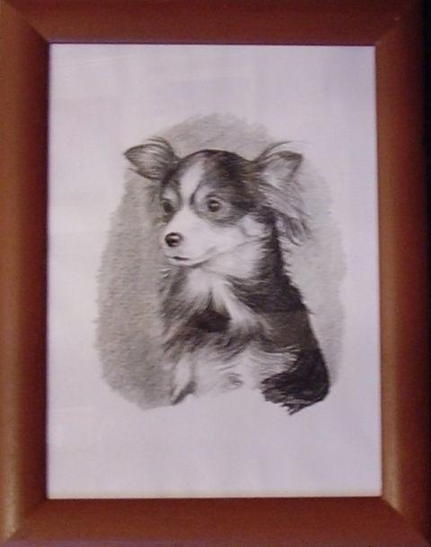 ostatní-kresby-psu (4)