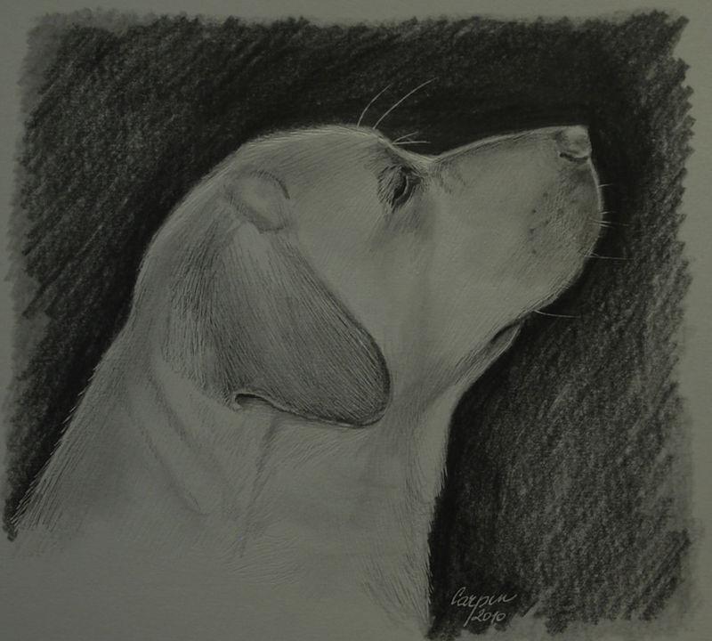 ostatní-Labrador