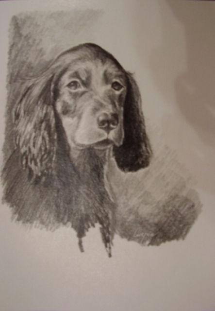 ostatní-kresby-psu (26)