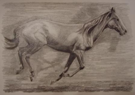 ostatní-kresby-koni (4)