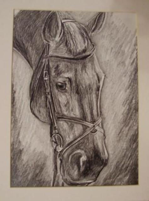 ostatní-kresby-koni