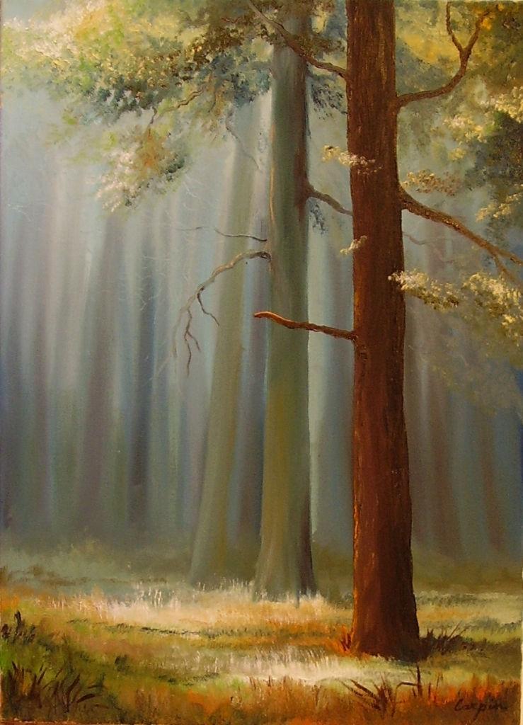 krajina-Šerosvit lesa