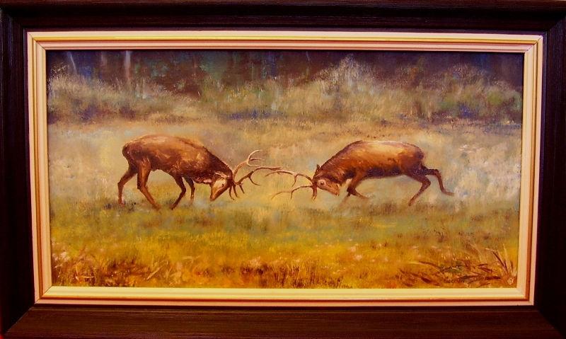 myslivost-Souboj jelenů