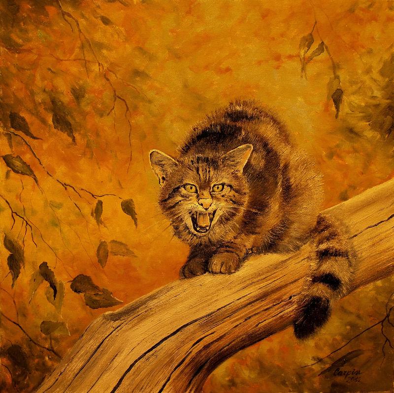 myslivost-Kočka divoká